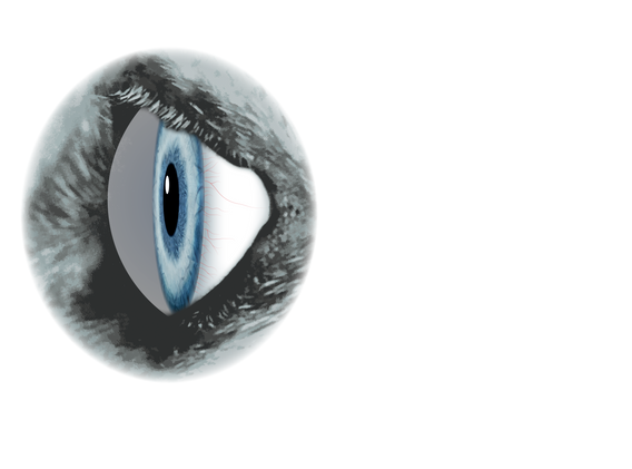 Eye lid_side view.png