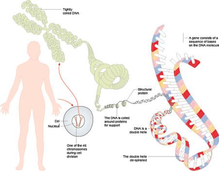 DNA04.jpg