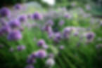 spring-2765725_edited-compressor (1).jpg