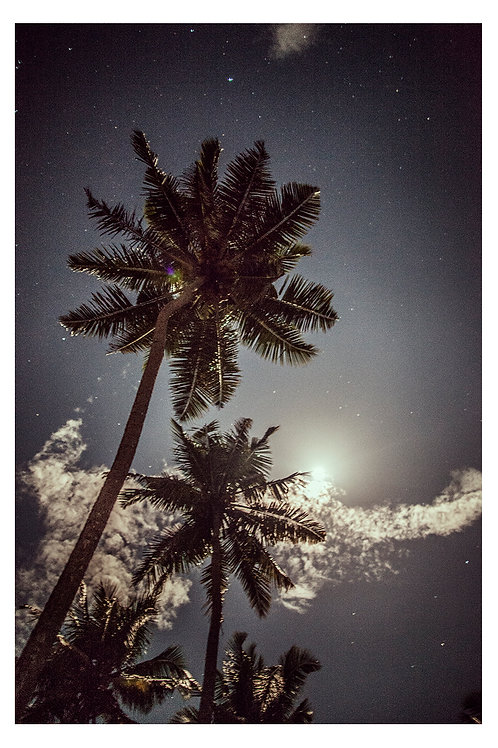 PRINT   PALMS & MOON   SRI LANKA