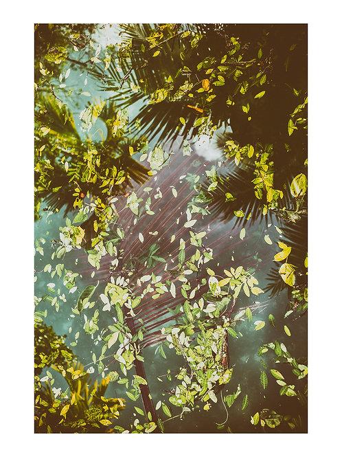 PRINT | MIAMI REFLECTIONS | LANDSCAPES