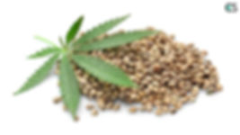 Hemp-Seeds-768x432.jpg