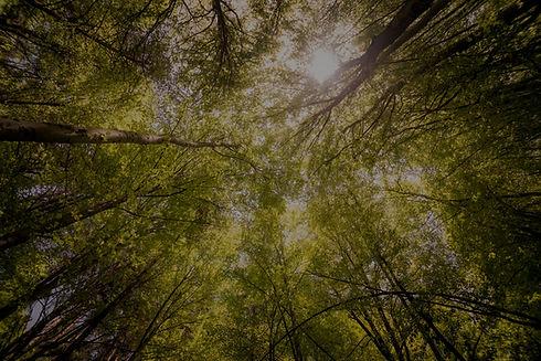 eco friendly trees sklar peppler