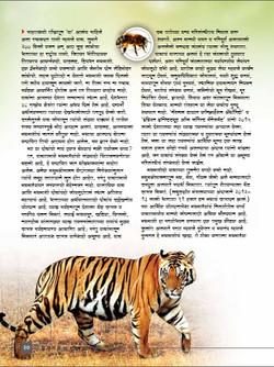AB Tiger Apr 16