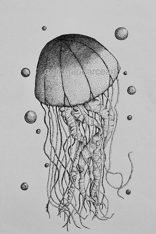 Drifting Tentacles - Artwork Gemma Pearce