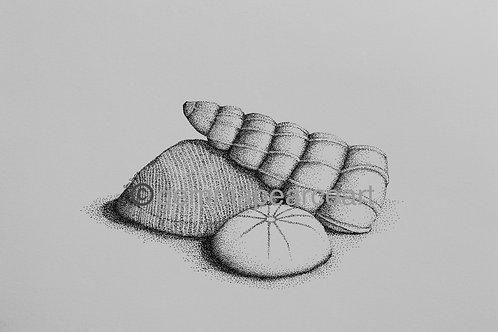 Scilly Shells - Artwork Gemma Pearce