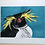 Thumbnail: Northern Rockhopper Print-By Vic Heaney