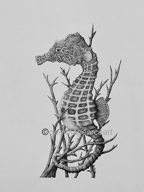 Hippocampus hippocampus - Gemma Pearce Print
