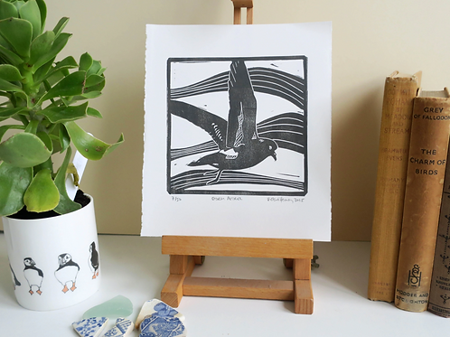 Storm Petrel Print - By Vic Heaney