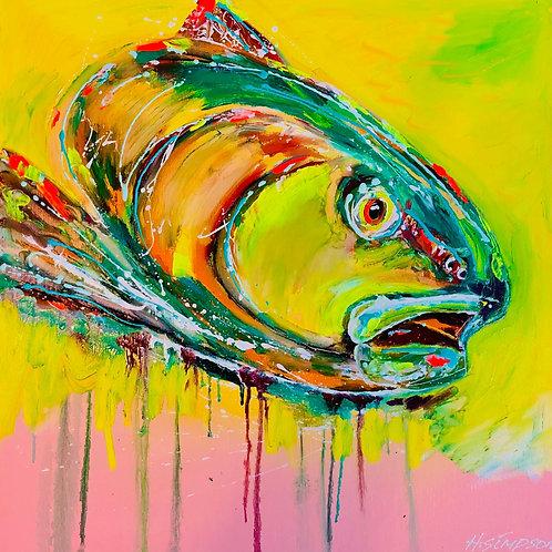 Scilly Pollock - Orginal artwork by Hayden Simpson