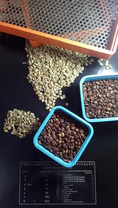 Coffee Bean Filter