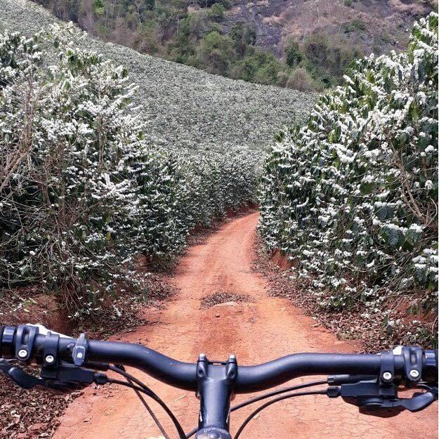 Riding Through Coffee Farm
