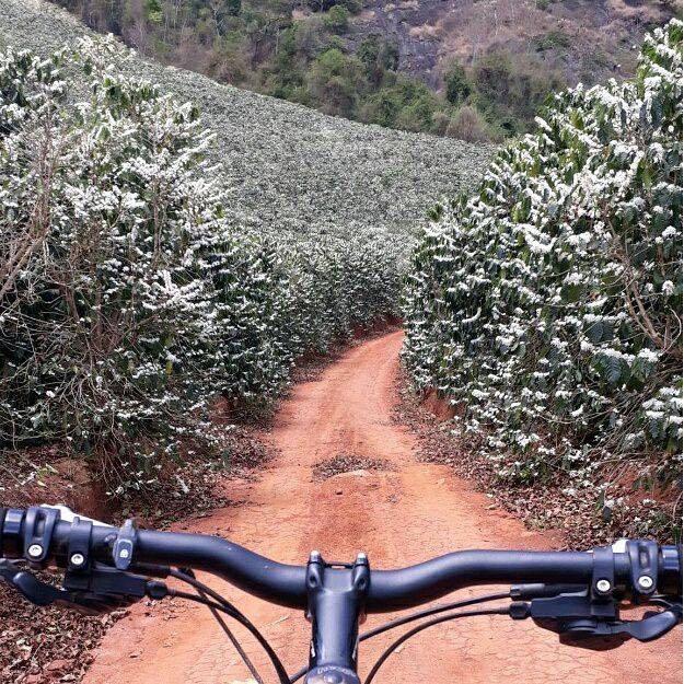 Riding_Through_Coffee_Farm