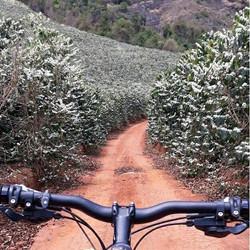 Riding Through Coffee Farm