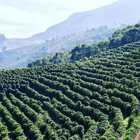 Costa_Rica_Coffee_Hills
