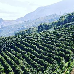 Costa Rica Coffee Hills