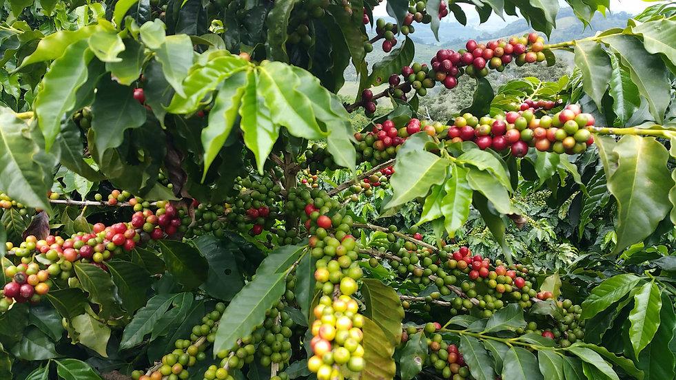 Artisan Speciality Coffee