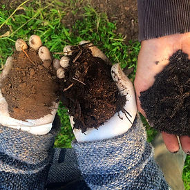 soil restoration.jpg