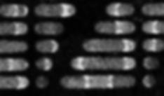 Screen Shot 2020-03-26 at 2.41.45 PM.png