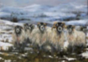 IMG_4415 A4 Shaggy Sheep 19 (1024x724).j