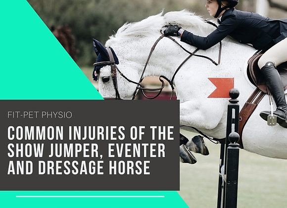 Common Injuries of the ShowJumper, Eventer and Dressage Horse