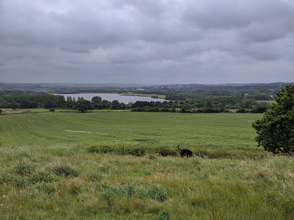 View of Pugneys from Sandal Castle