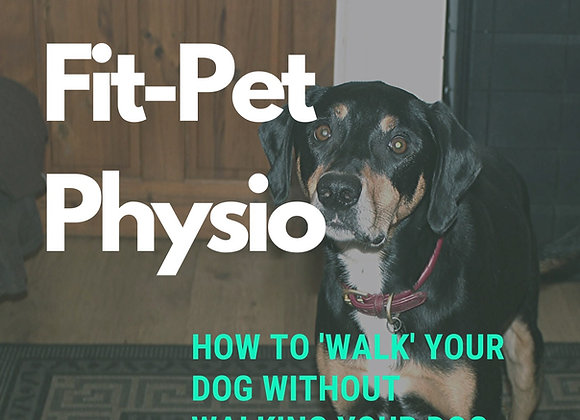 How to 'Walk' your dog without walking your dog