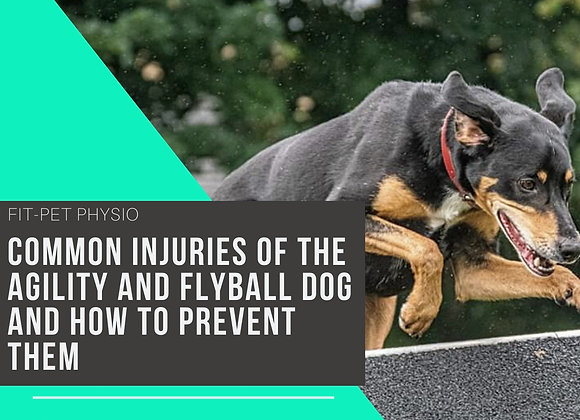 The Common Injuries of Agility and Flyball dogs