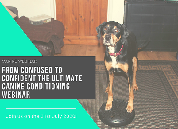 From Confused to Confident the Ultimate Canine Conditioning Webinar