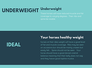 Body condition scores horse .png