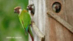 birding brazil