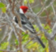 birding turs brazil