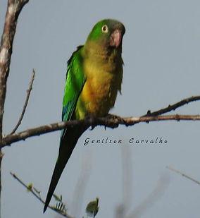 birding tours brazil