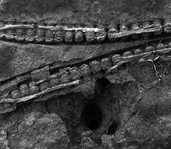 Fosil 300 millones editado.jpg
