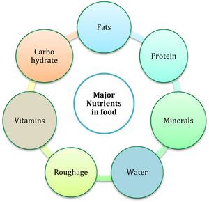 Chart showing various nutrients in food