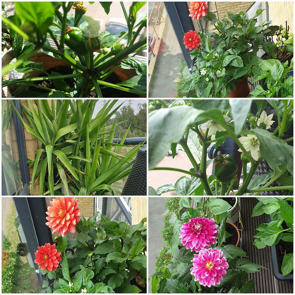 Collage of balcony flowers and plants