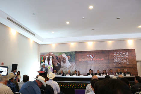 Asamblea General Ordinaria de la Simmental & Simbrah