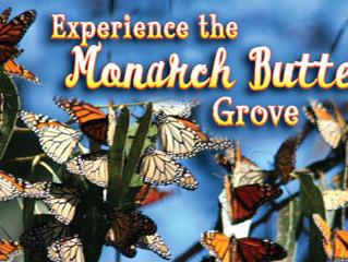Monarch Butterfly Grove - Pismo Beach, CA