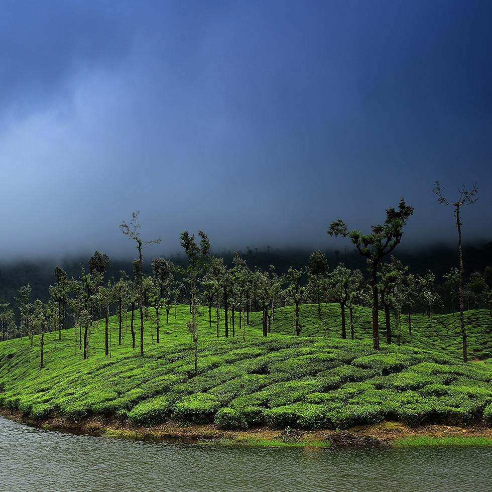 Valparai Tea estates