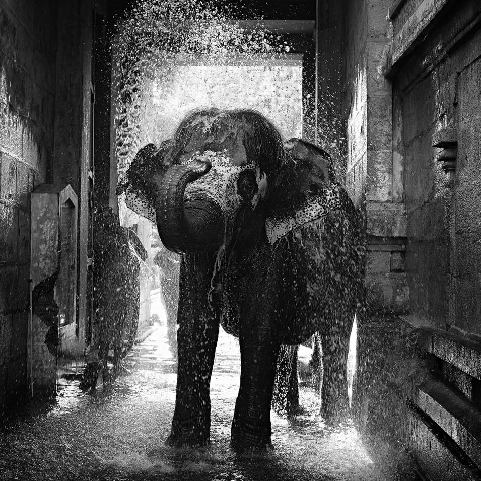 Temple Elephant