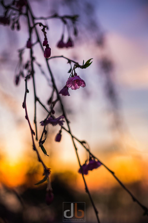 Spring_2015-05-05-159997.jpg