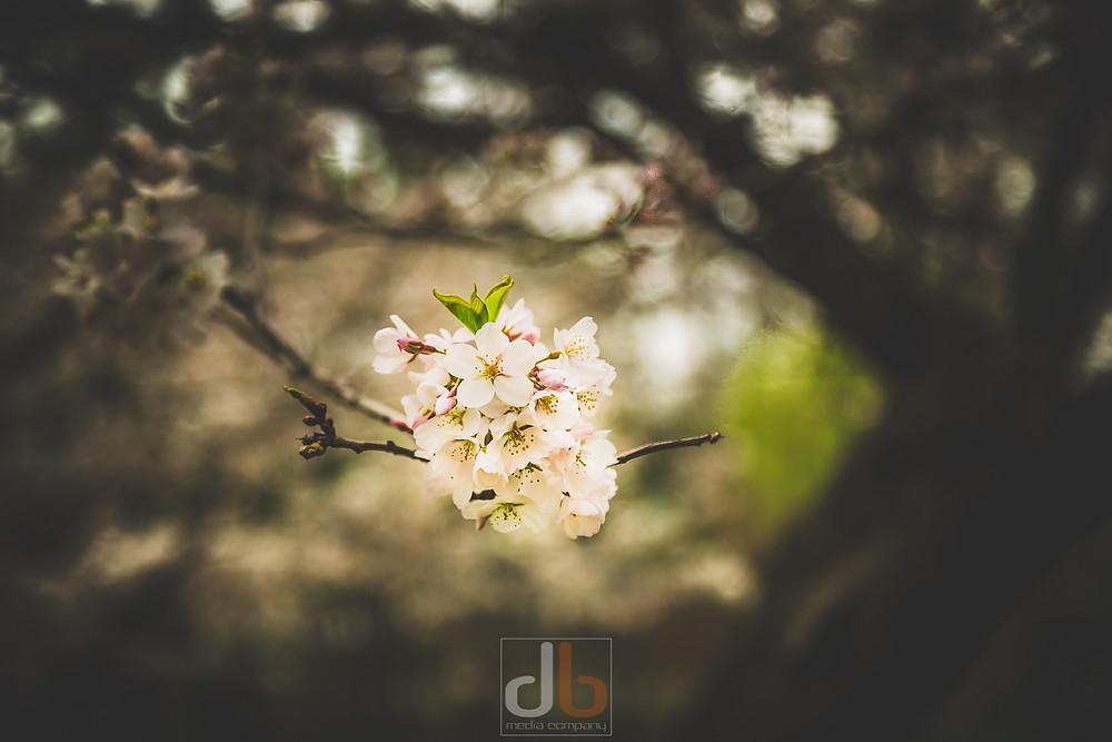Spring_2015-05-05-9794.jpg