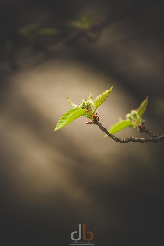 Spring_2015-05-05-9844-2.jpg