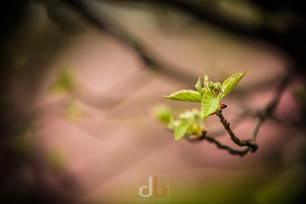Spring_2015-05-05-9840.jpg