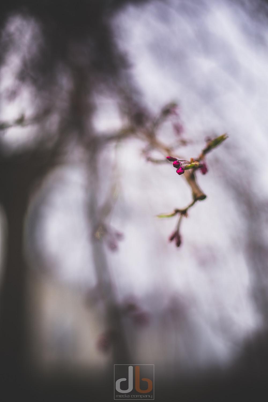 Spring_2015-05-05-9186-2.jpg