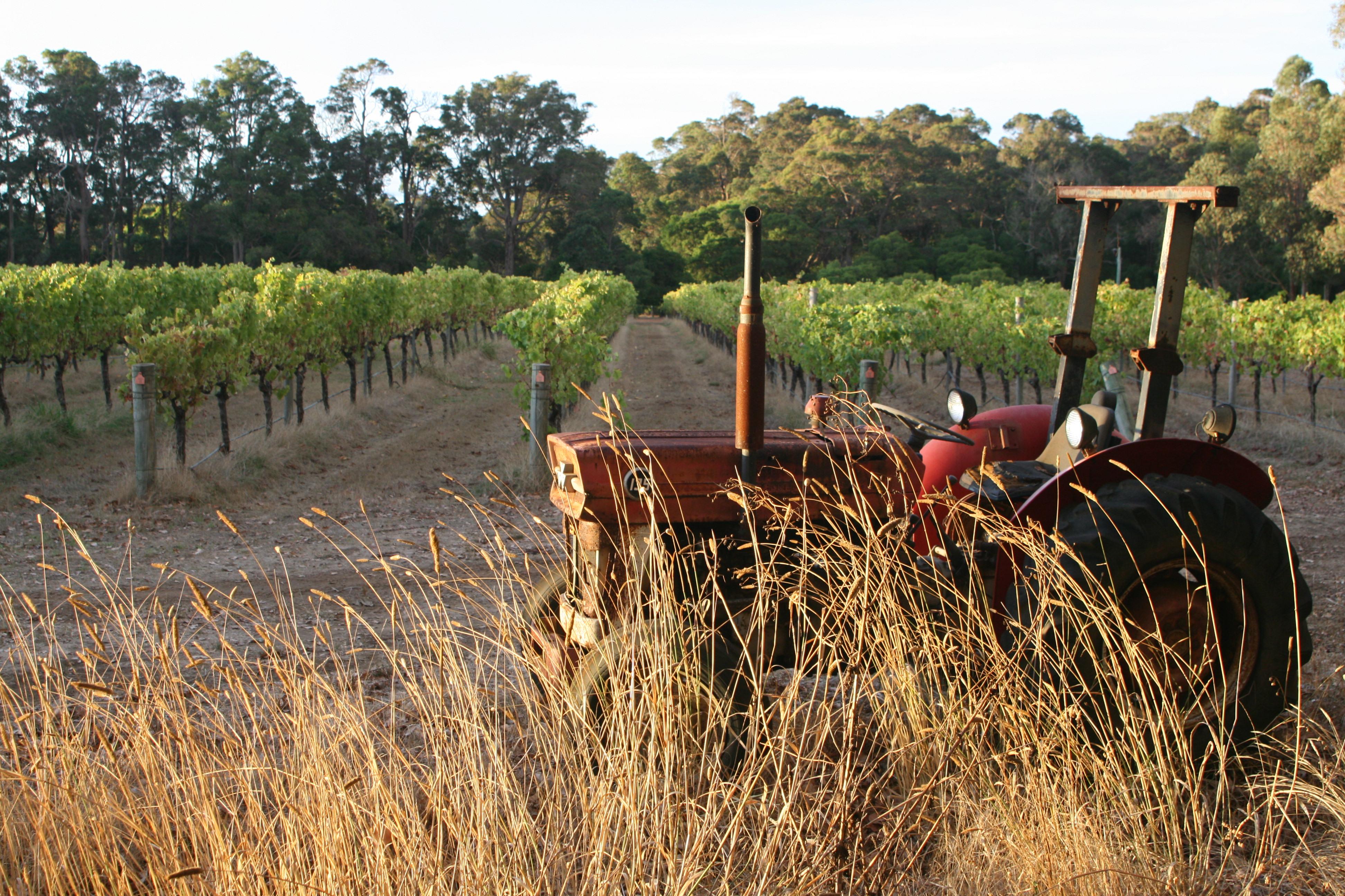 Cape Grace Vineyard