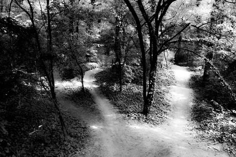 Forest fairytale17.jpg