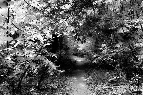 Forest fairytale2.jpg