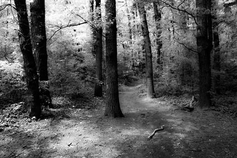 Forest fairytale9.jpg