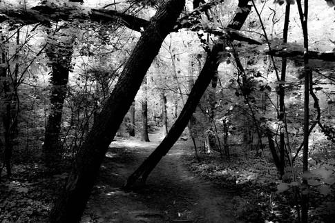 Forest fairytale7.jpg